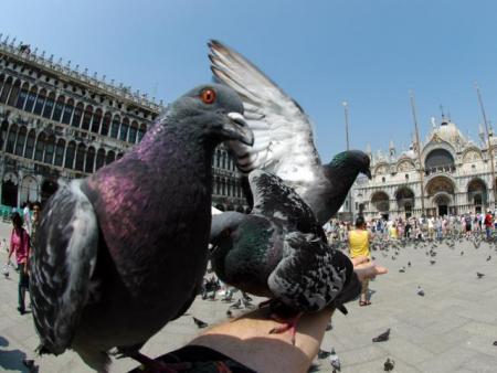 palomas-venecia.jpg