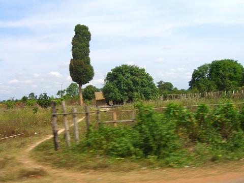 camboya-arboles.jpg